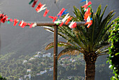 Clothes line and palm tree at Valle Gran Rey, Gomera, Canary Isles, Spain, Europe