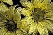 Auszug, Blumen, Kunst, Makro, G34-996393, agefotostock