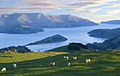 Late evening light over Akaroa Harbour from near Hilltop Banks Peninsula New Zealand
