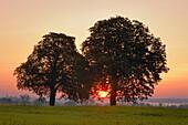 Sunrise behind trees  Mecklenburg-Western Pomerania, Germany, Europe