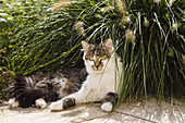 Domestic cat sitting in the garden, Germany