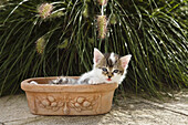 Domestic cat, kitten with flowers, Germany