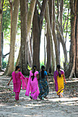 Indian women wearing colourful saris walking through the coastal forest of Radha Nagar Beach, Beach 7, Havelock Island, Andamans, India