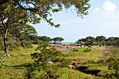 Landscape with trees and seaview, Yala National Park, Sri Lanka, Asia