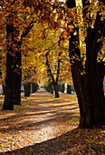 Leaf covered tree-lined allee in Autumn, Neuruppin, Land Brandenburg, Germany