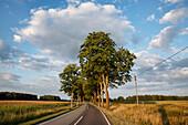 Tree-lined allee at Putlitz, Prignitz, Land Brandenburg, Germany