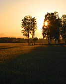 Agriculture in sunset