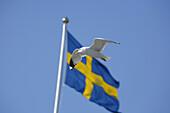 Swedish flag and gull