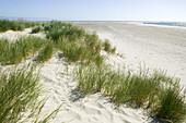 Sand dunes and beach grass, Skagen, Jutland, Denmark