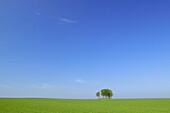 Trees in grainfield