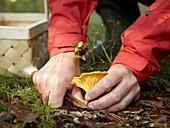 Woman in red coat picking mushroom