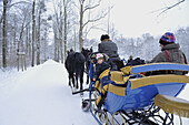 People in horse drawn sleigh in snow covered forest, Saxony, Germany, Europe