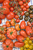 Different coloured tomatoes, Vegetables, Fruit, Healthy food