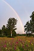Regenbogen, Alpenvorland, Oberbayern, Deutschland