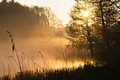 Weiher im Morgenlicht, Alpenvorland, Oberbayern, Bayern, Deutschland
