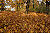 Autumn leaves and trees in the park near the city walls, Braunschweig, Brunswick, Lower Saxony, Northern Germany