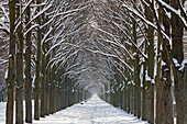 Herrenhäuser Allee in the winter snow, avenue of lime trees, Georgen Garten, Hanover, Lower Saxony, Germany