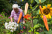 Pensioner working in the so-called womens garden in the gardens of Medingen abbey, Medingen, Bad Bevensen, Lower Saxony, northern Germany