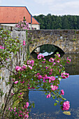 Rosebush on the wall of the moat, Gesmold Estate, Gesmold castle, Gesmold, Meller, Lower Saxony, Germany