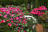Flowering Rhododendron in front of a forest and bird house, former forest warden's garden, now a private garden belonging to von Düring, Horneburg, Lower Saxony, Germany