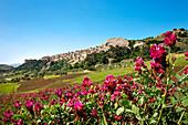 Clover, Sperlinga, Sicily, Italy