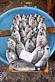 Fish market, Catania, Sicily, Italy
