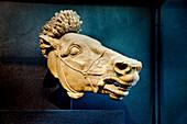 Ancient Horse head, archeological museum, Gela, Sicily, Italy