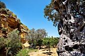 Garden of Kolymbetra, Valley of temples, Agrigento, Sicily, Italy