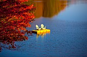 red maple, lake, dock
