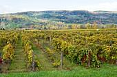 Vineyards Finger Lakes Region New York Winery