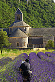 Artist painting Senanque abbey in the middle of at lavender field, Gordes, Vaucluse, Provence, France