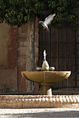 Detail of a fountain in Villanueva de los Infantes Ciudad Real, Spain.