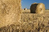 Bales of harvested grain, agricultural fields in the steppe cereals of Almenara de Tormes  Salamanca  Castilla y Leon  Spain