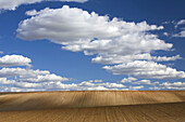 Steppe and cereal fields with no harvest  Agricultural landscape in Cañizal  Zamora  Castille and Leon  Spain