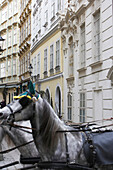 Alley with horses in Vienna in the old town, Austria
