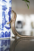 Lizard on a vase, Cousine Island, Seychelles