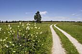 Trail in Kochelsee Moos in Upper Bavaria, Germany