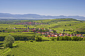 View over vineyards at Oberrotweil and Burkheim, Vosges, Spring, Kaiserstuhl, Baden-Württemberg, Germany, Europe