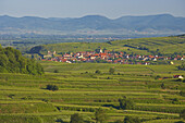 View over Vineyards at Burkheim, Kaiserstuhl, Baden-Württemberg, Germany, Europe