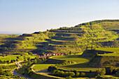 View to vineyards, Mondhalde, Oberrotweil, Vogtsburg im Kaiserstuhl, Baden-Wurttemberg, Germany