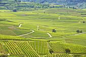View over vineyards at Bischoffingen, Kaiserstuhl, Baden-Württemberg, Germany, Europe
