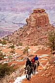 Grand Canyon National Park, Arizona - Mule riders climbing the South Kaibab Trail above Cedar Ridge in the Grand Canyon in winter  © Jim West