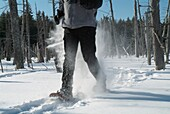 A person snowshoeing in a New England forest  Strong winds cause the snow to blow around  Located in New Hampshire USA