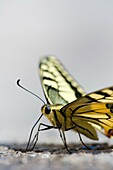 Macro de una mariposa