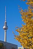 Autumn in Berlin Germany EU
