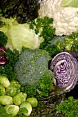 Food still life with all sorts of fresh juicy vegetables and greens Cauliflower, broccoli, green cabbage, red cabbage, head lettuce, red leaf lettuce, brussels sprouts, belgian endive, radicchio, nappa and curly parsley Artistic background