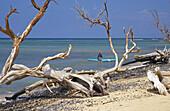 Driftwood and surfer at Ukumehame Beach, Maui, Hawaii, USA, America