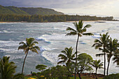 Palm trees in the evening at the North Shore, Turtle Bay, Oahu, Hawaii, USA, America