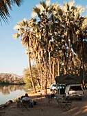 Namibia - The beautiful campsite of the Omarunga Camp in the shade of Makalani palm trees Hyphaene petersiana at the bank of the Kunene River very close to the Epupa Falls The Kunene is border river between Namibia and Angola Kaokoland, Kunene region, N
