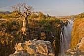 Baobab tree on the edge of the Epupa Falls, Northern Namibia, Africa
